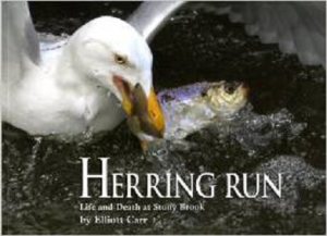 herring run